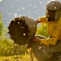 Жаклин Бат: Како од спалените степи да зе влезе во медена земја